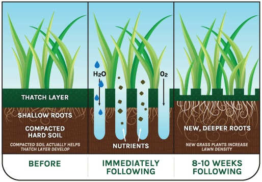 Why Aerate Your Lawn Kw Landscaping