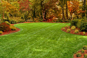 MD fall lawn care