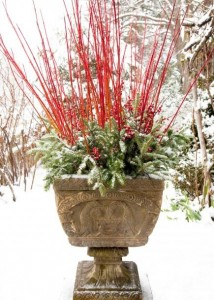 winter garden container