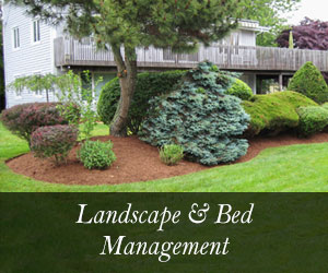 landscaping and bed management